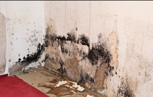 mold removal orange county service area