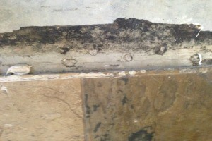 Mold Odor Removal